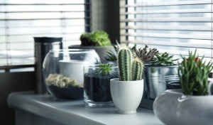 Include plants in your office or home for a healthier environment
